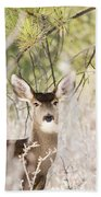 Herd Of Mule Deer In Deep Snow Beach Towel