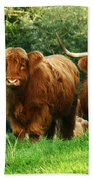 Highland Cattle Beach Towel