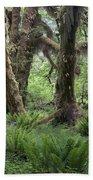 Hoh Rain Forest 3371 Beach Towel