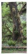 Hoh Rain Forest 3381 Beach Towel
