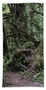 Hoh Rain Forest 3389 Beach Towel
