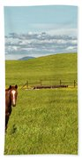 Horse Grazing Beach Towel