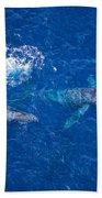 Humpback Whales Aerial Beach Towel