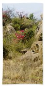 Hunting Lionesses Beach Towel