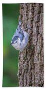 Huthatch Bird  Nut Pecker In The Wild On A Tree Beach Towel