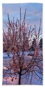 Icy Tree At Sunset  Beach Towel
