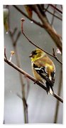 Img_0001 - American Goldfinch Beach Towel
