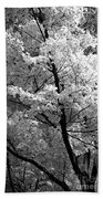 Infrared Tree Pic Beach Towel