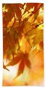 Japanese Maple In Fall Beach Towel