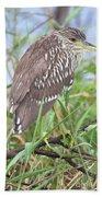 Juvenile Black-crowned Night Heron Beach Sheet