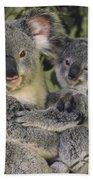 Koala Phascolarctos Cinereus Mother Beach Towel by Gerry Ellis