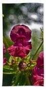 Lady Slipper Orchid Dan146 Beach Towel