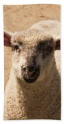 Lamb Looking Cute. Beach Towel