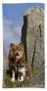 Lapinko�ra Dog And His Pup Beach Towel