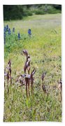 Lilac Flower In Green Canvas Spring Has Arrived 2 Beach Towel