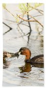 Little Grebe Tachybaptus Ruficollis Beach Towel