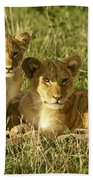 Little Lions Beach Towel