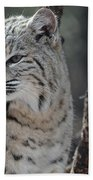 Lynx Looking Around At His Environment Beach Towel