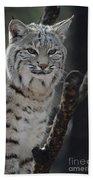 Lynx Perched In A Tree Beach Towel
