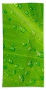 Macro Closeup Of Waterdrops On A Leaf Beach Towel