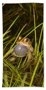 Male Toad Beach Towel