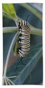 Monarch Catterpillar  Beach Towel