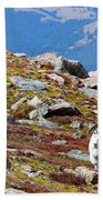 Mountain Goats On Mount Bierstadt In The Arapahoe National Forest Beach Towel