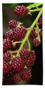 My Blackberries Beach Sheet
