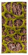 Myenteric Plexus, Sem Beach Towel
