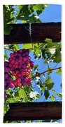 Napa Valley Inglenook Vineyard -2 Beach Towel