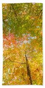 Natures Canopy Of Color Beach Towel