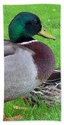 New Zealand - Mallard Ducks Beach Towel