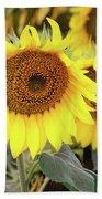 Nice Sunflowers Beach Sheet
