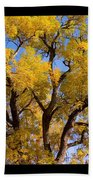 Old Giant  Autumn Cottonwood Beach Towel