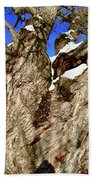Old Willow Tree Beach Towel