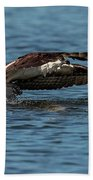 Osprey Fishing Beach Towel