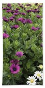 Osteospermum Flowers Beach Towel by Erin Paul Donovan