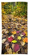Path In Fall Forest Beach Towel by Elena Elisseeva