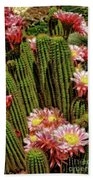 Pink Cactus Flowers Beach Towel
