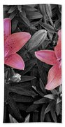 Pink Daylilies With Partially Desaturated Petals And Black And White Background Beach Towel