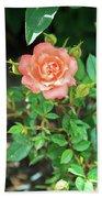 Pink Rose In The Garden Beach Towel
