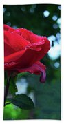 Pink Rose With Dew Drops Beach Towel