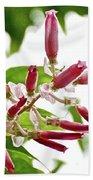 Pink Tropical Flower In Huntington Botanical Garden In San Marino-california Beach Towel