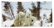 Polar Bear Ursus Maritimus Trio Beach Sheet