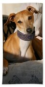 Portrait Of An Italian Greyhound Beach Towel