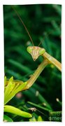 Praying Mantis Beach Towel
