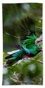 Quetzal In Costa Rica Beach Towel
