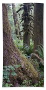 Quinault Rain Forest 3152 Beach Towel