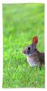 Rabbit Beach Sheet