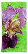 Raindrops On Purple And Yellow Iris Beach Sheet